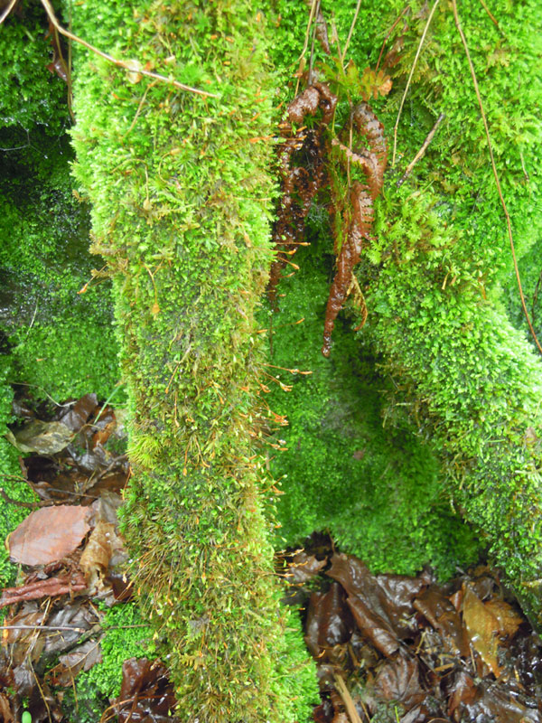 Lush velvety moss. In the future this would make a lovely tapestry, with soft fluffy parts in contrast with the stiffer leaves interspersed throughout.